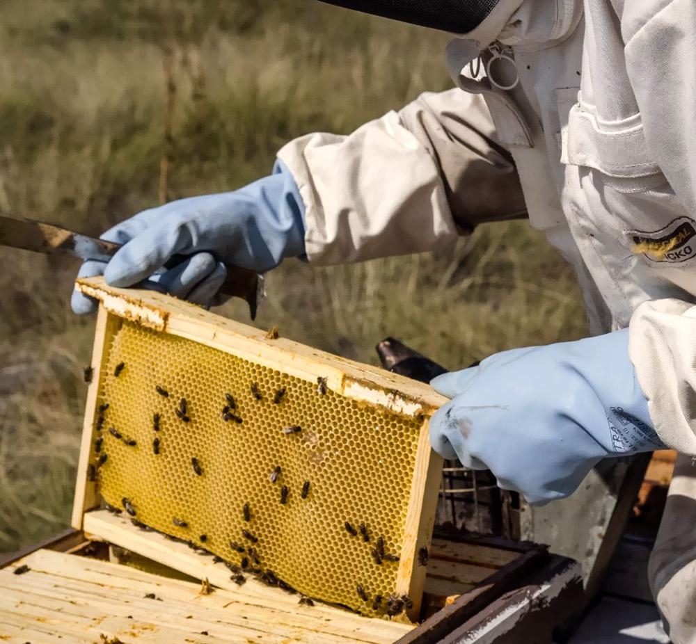 Profesionales Apicultores en La miel de Cris