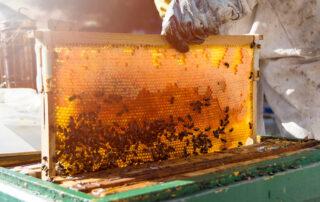 Las bondades de las abejas